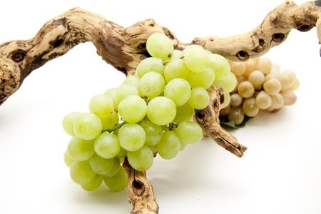 uvas vino: Uvas de vino con ra�z Foto de archivo