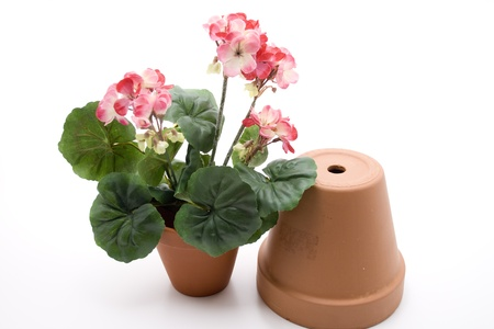 Geranium with flowerpot photo