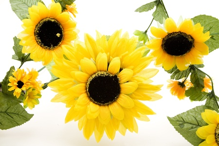 artificially:  Nice sunflowers