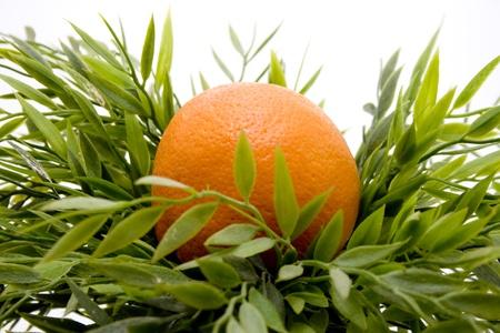 artificially: Orange in a green plant