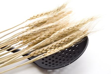 skimmer: Wheat ear with skimmer