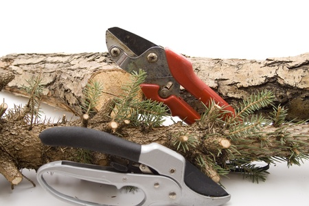 testify: Garden worries with fir branch Stock Photo