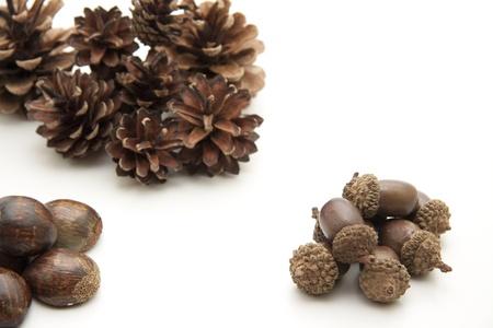 artificially: Fir cones with acorns
