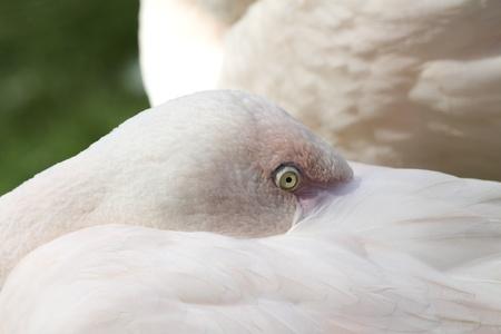 largely: Flamingo Stock Photo