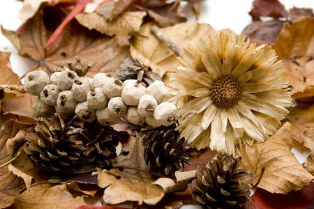 autumnally: Autumn leaves with dry flower