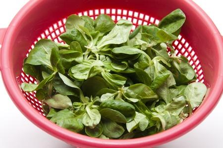 sieve: Field Salad in the kitchen sieve