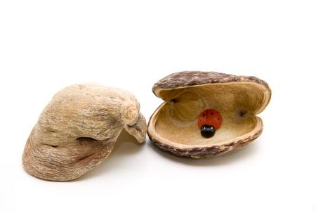 nutshell: Nutshell with wooden beetle Stock Photo