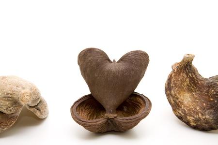 nutshell:    Nutshell in heart form