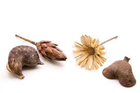 nutshell:    Nutshell with straw flower Stock Photo