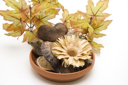 nutshell:    Nutshell and straw flower in ceramic peel