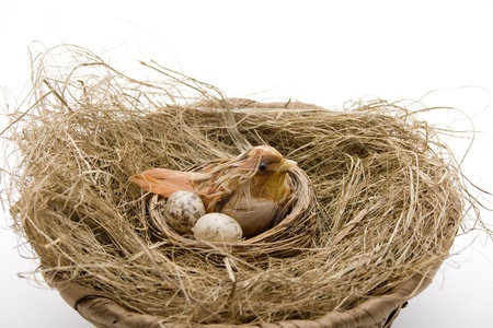 Bird nest in the hay photo