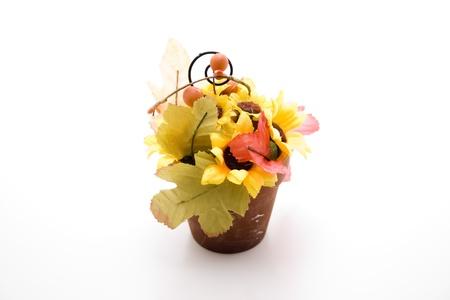 Sunflower in the flowerpot photo