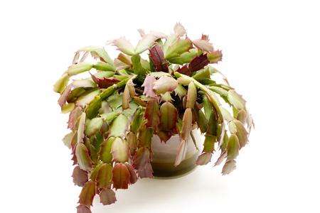 Green plant photo