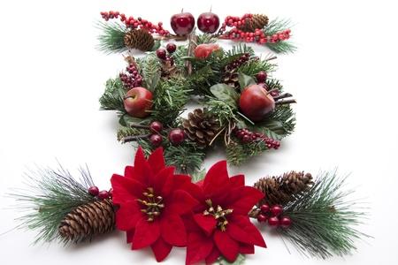 christmas flower: Christmas flower