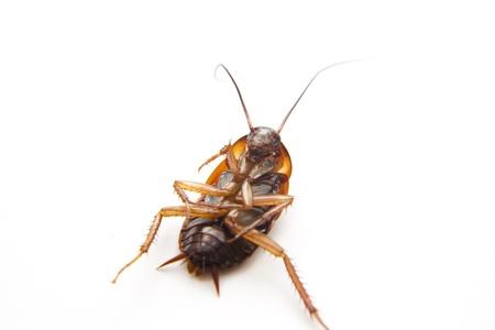 largely: Big beetle