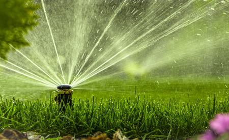 sistema di irrigazione automatica che innaffia il prato su uno sfondo di erba verde