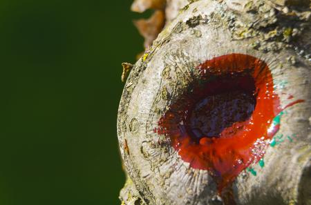果実の病木の皮、リンゴの木黒がんをクローズ アップ