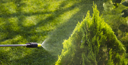 Gardener sprinkles young plum tree from pests and diseases with bottle sprayer. He holds sprayer in his hand