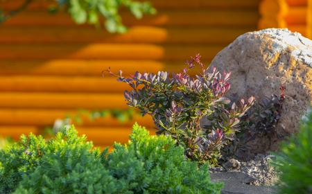 手入れきちんと色が和風の庭