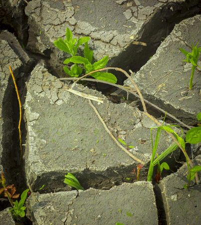 the decay of soil after a drought, the influence of an aggressive environment on nature.