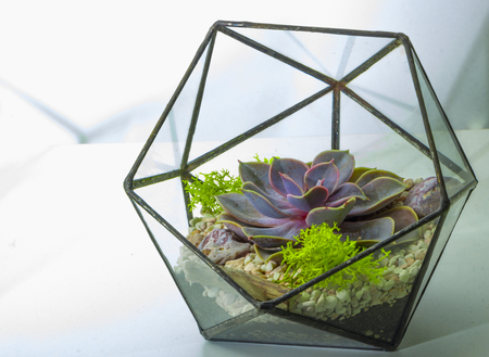 Green succulent in a glass pot in scandinavian style.