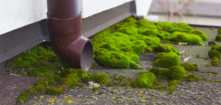 Green moss on the roof of the house. coating failure.