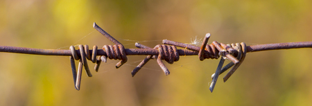fragment of an old rusty barbed wire on a brown background