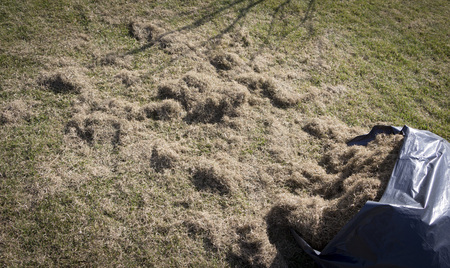 Many felts on green grass after aeration of the lawn close up Stock fotó