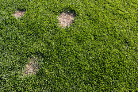 Pests and disease cause amount of damage to green lawns, lawn in bad condition and need maintaining Standard-Bild - 101194420