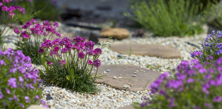 Floral background from the phlox of the subulate.