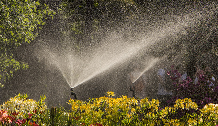 Clever garden with a fully automatic irrigation system, water azaleas. background Stock Photo