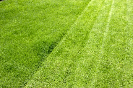 Juicy young grassy grass close up background