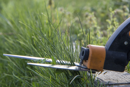 Cutting lawn with scissors in hard-to-reach places, gardener professional. Stockfoto