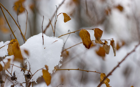 Snow melts on tree branches, city street, selective focus Stock Photo