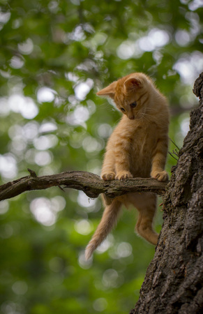 Cat in distress - orange tabby cat about to fall off of a tree with a worried look on his face