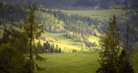 Cloudy weather in the mountains, Ukrainian Carpathians Banque d'images