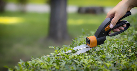 Cutting lawn with scissors in hard-to-reach places, gardener professional