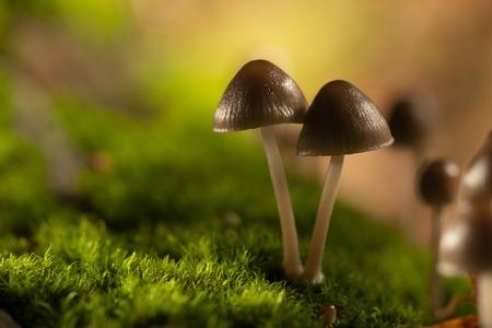 Galerina marginata is deadly poisonous mushroom. In stump