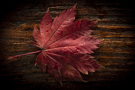 Background autumn leaves of japanese palm tree maple on wood texture background Stock Photo