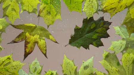 Fallen autumn leaves on wet from rain glass close up