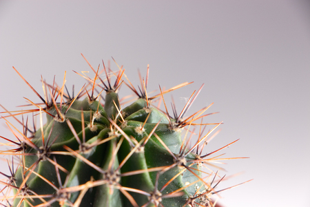 Cactus in a red pot on a white background