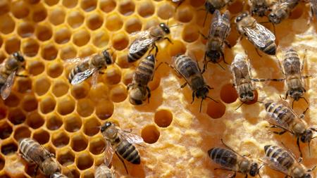 Das Konzept der Imkerei, die Textur einer Wabenzelle, auf der sich die Bienen bewegen und arbeiten. Hintergrund hautnah