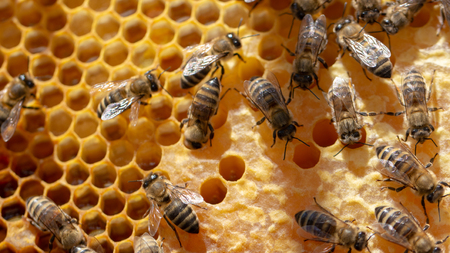 The concept of beekeeping, the texture of a honeycomb cell, on which the bees move and work. back ground close up