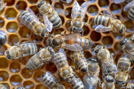 Many working bees on the surface of cells with honey and larvae. Backgound, texture Stock Photo