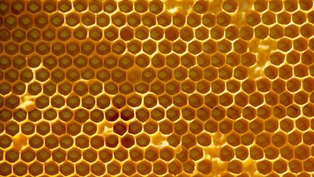 close up Honeycomb with honey. macro shot