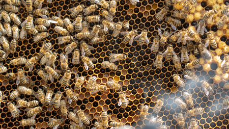 The concept of beekeeping, the texture of a honeycomb cell, on which the bees move and work. back ground close up Imagens - 123890547