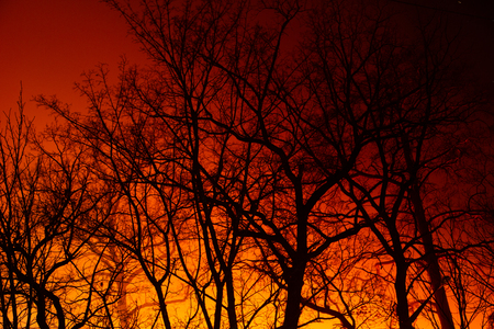 Night fire in the autumn deciduous forest. background Stock Photo - 127612373