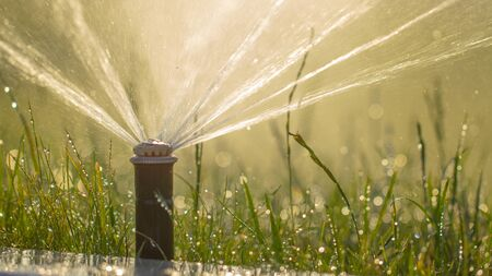 automatic sprinkler system watering the lawn on a background of green grass, close-up 版權商用圖片
