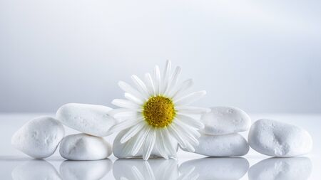 Flower daisies on a white stones pyramid for spa, a holiday concept, or chamomile tea. Background