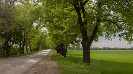 Soil road on the agrarian field, blurred with showers. Background Stock Photo
